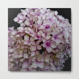 white flower 19 Metal Print
