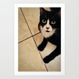 Cat Looking Up Art Print