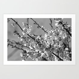 Spring Floral Black and White Art Print