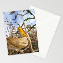 yellowed ripe corn Stationery Cards
