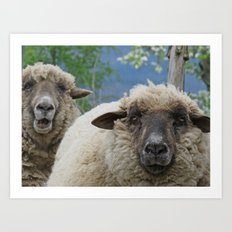 Disappointed sheep Art Print