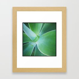 Dana Point Succulent 1 Framed Art Print