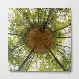 Le bois de Vincennes à l'automne // The forest of Vincennes in autumn Metal Print