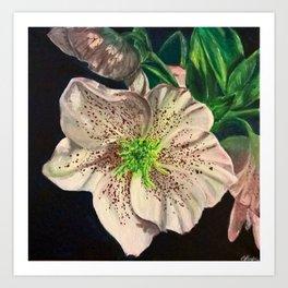 Christmas Rose flower painting  Art Print