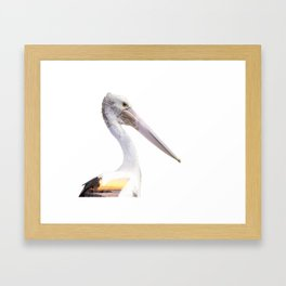 Australian Pelican - Pelecanus conspicillatus Framed Art Print