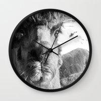 alpaca Wall Clocks featuring Alpaca by WoosterTheRooster