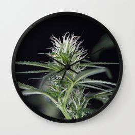 Cannabis Marijuana Flower Early Stage Wall Clock
