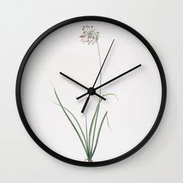 Vintage Nodding Onion Illustration Wall Clock