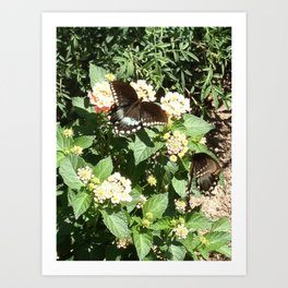 Butterflies on Flowers Art Print