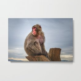 Japanese macaque on a trunk, Iwatayama monkey park, Kyoto, Japan Metal Print