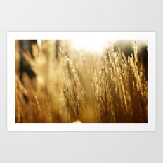 Morning Fields Art Print