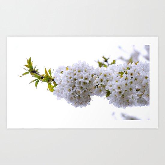 spring mode on Art Print
