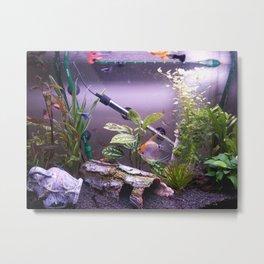 Fishies Metal Print