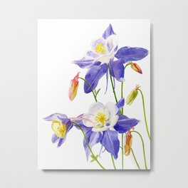 Blue Columbine on White Metal Print