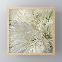 Ivory White Feathery Mums Floral Photo Framed Mini Art Print