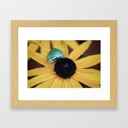 Tree Frog Framed Art Print