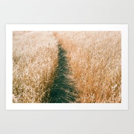 Pathway through the Golden Grasses - 35mm Film Art Print