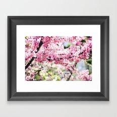 redbud Framed Art Print