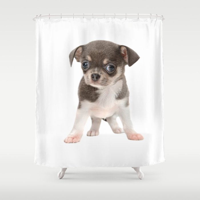 Chihuahua Puppy Standing Shower Curtain