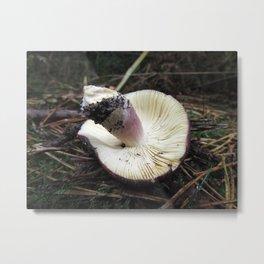 Mushroom Gills Metal Print