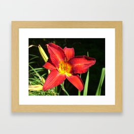 Flower Pic 11 Framed Art Print