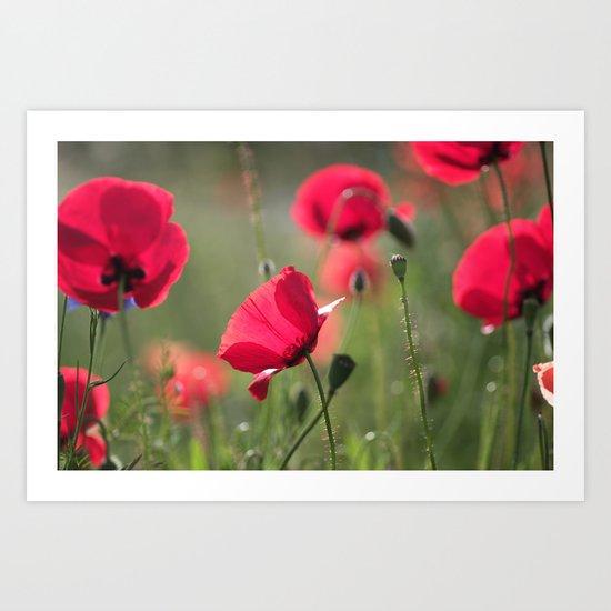 Fantasie Poppy  Art Print