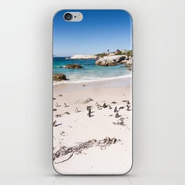 Penguins on Boulders Beach in Cape Town, South Africa iPhone Skin