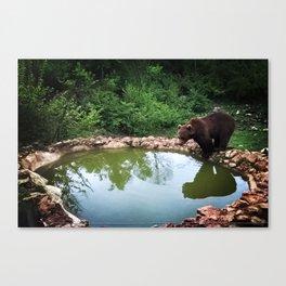 Bear in natural habitat Canvas Print