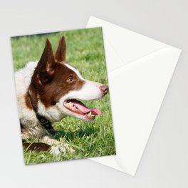 Dog -  Border Collie -  Collie -  Brown -  White -  Down -  Laying - Vintage illustration. Retro décor. Stationery Cards