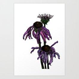Echinacea - cone flower Art Print