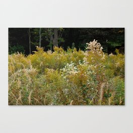 Brush Palette Canvas Print