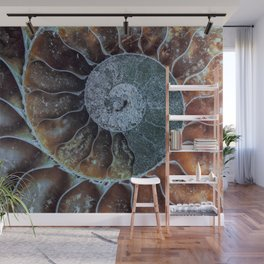 Spiral Ammonite Fossil Wall Mural