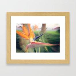 URBAN BIRD Framed Art Print