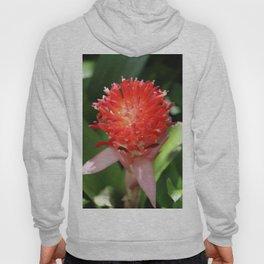 Bromeliad Blooming Hoody