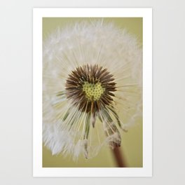 Dandelion (2) Art Print