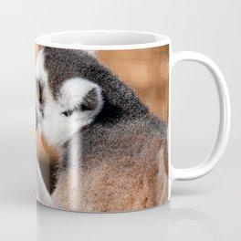 Ring tail lemur eating Coffee Mug