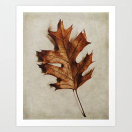 portrait of an oak leaf Art Print