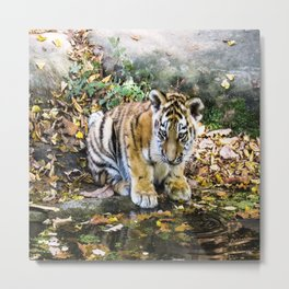 Autumn Tiger Cub Metal Print