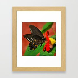 Butterfly VI Framed Art Print