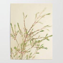 Waxflower Poster