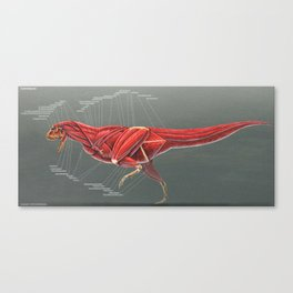 Carnotaurus Muscle Study Canvas Print