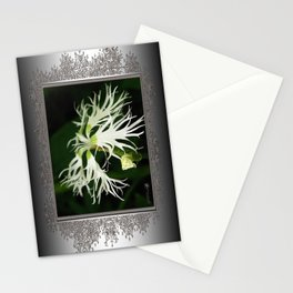 Dianthus named Superbus White Stationery Cards