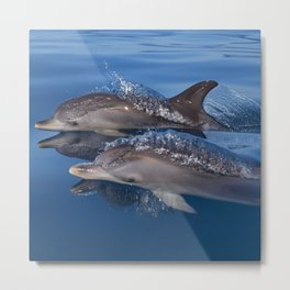 Beautiful Spotted dolphins Stenella frontalis Metal Print