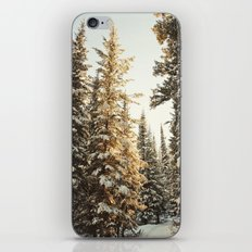 Snowy Pine Trees Glowing in Sunlight iPhone & iPod Skin