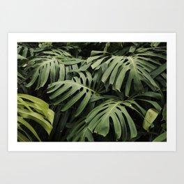Botanical Dreams Art Print