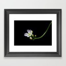 Blossom of a Venus Trap  Framed Art Print