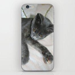 Cute Grey Kitten Relaxing  iPhone Skin