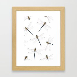 Dragonfly pattern Framed Art Print