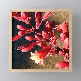 Firecracker Red Flower Blooms Framed Mini Art Print