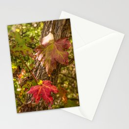 Red Leaves Enchantment Stationery Cards